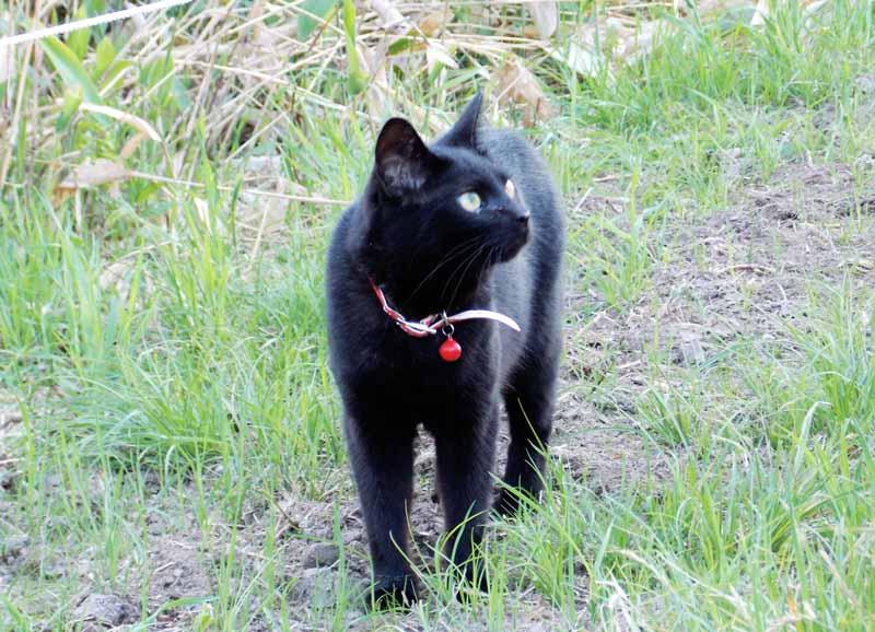 黒猫ビリー