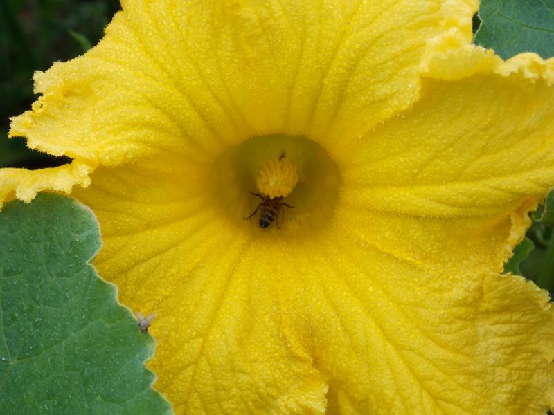 花の中の蜂