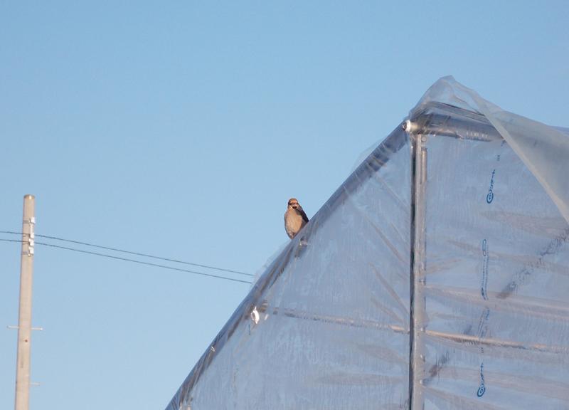 鳥の視線。